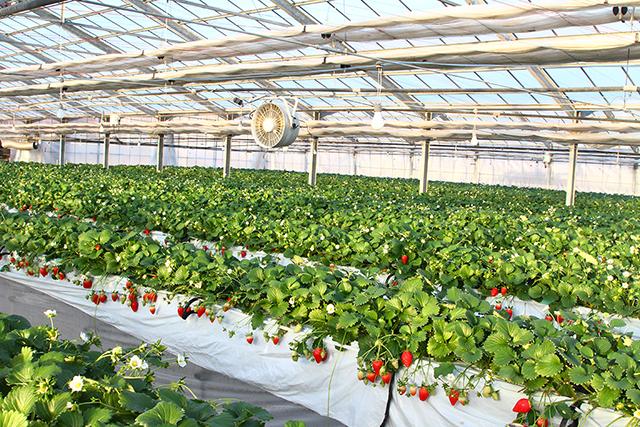 バリアフリー対応農園